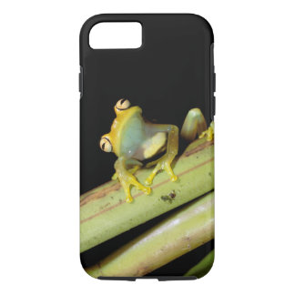 South America, Ecuador, Amazon. Tree frog (Hyla iPhone 7 Case