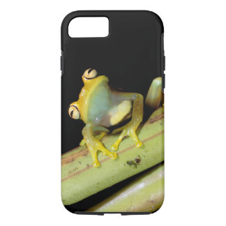 South America, Ecuador, Amazon. Tree frog (Hyla iPhone 8/7 Case