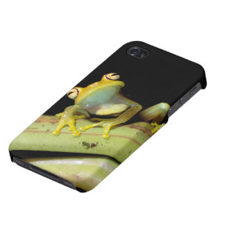 South America, Ecuador, Amazon. Tree frog (Hyla Covers For iPhone 4