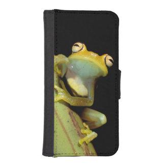 South America, Ecuador, Amazon. Tree frog (Hyla iPhone SE/5/5s Wallet Case