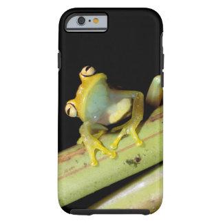South America Ecuador Amazon Tree frog Hyla iPhone 6 Case