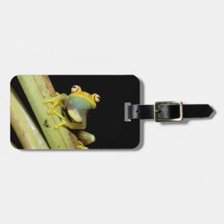 South America, Ecuador, Amazon. Tree frog (Hyla Luggage Tag
