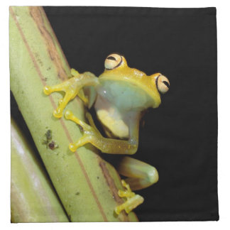 South America, Ecuador, Amazon. Tree frog (Hyla Napkin