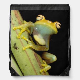 South America, Ecuador, Amazon. Tree frog (Hyla Drawstring Backpacks