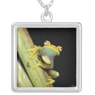 South America, Ecuador, Amazon. Tree frog (Hyla Silver Plated Necklace