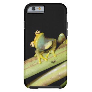 South America, Ecuador, Amazon. Tree frog (Hyla Tough iPhone 6 Case