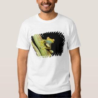 South America, Ecuador, Amazon. Tree frog (Hyla Tshirt