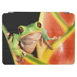 South America, Ecuador, Amazon. Tree frog iPad Air Cover