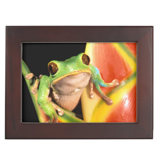 South America, Ecuador, Amazon. Tree frog Keepsake Box