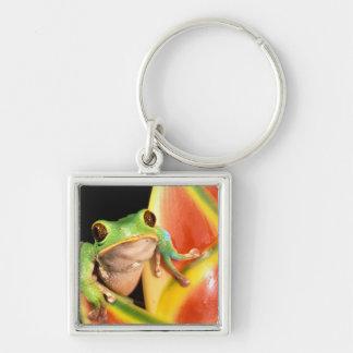 South America, Ecuador, Amazon. Tree frog Key Ring