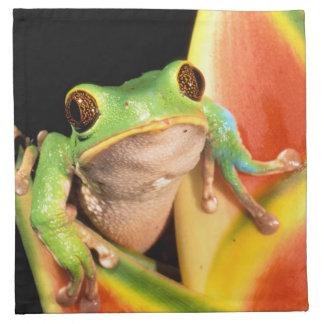 South America, Ecuador, Amazon. Tree frog Napkin