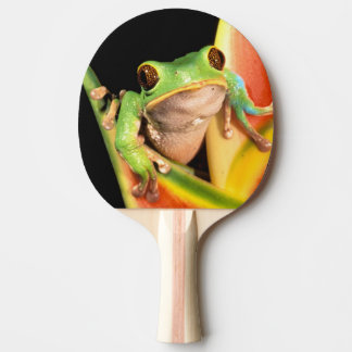 South America, Ecuador, Amazon. Tree frog Ping Pong Paddle