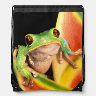 South America, Ecuador, Amazon. Tree frog Cinch Bags