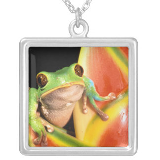 South America, Ecuador, Amazon. Tree frog Silver Plated Necklace