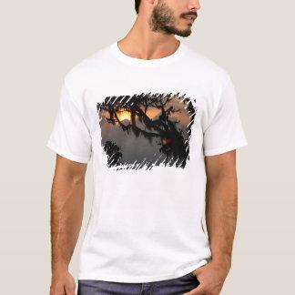 South America, Ecuador, cloud forest scene in T-Shirt