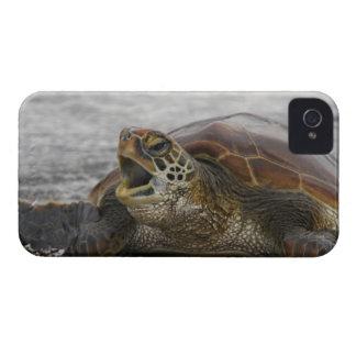 South America, Ecuador, Galapagos Islands, 2 Case-Mate iPhone 4 Case