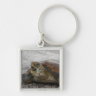 South America, Ecuador, Galapagos Islands, 2 Key Ring