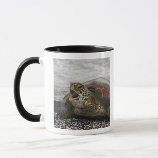 South America, Ecuador, Galapagos Islands, 2 Mug