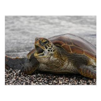 South America, Ecuador, Galapagos Islands, 2 Postcard