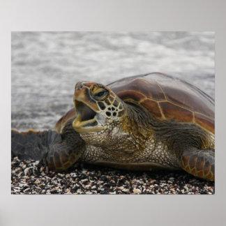 South America, Ecuador, Galapagos Islands, 2 Poster