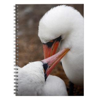 South America, Ecuador, Galapagos Islands. Nazca Notebooks