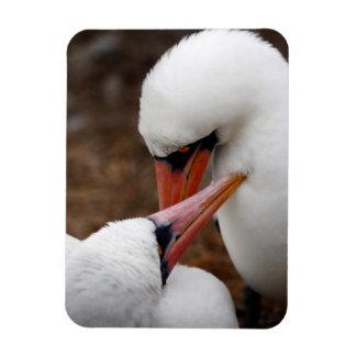 South America, Ecuador, Galapagos Islands. Nazca Rectangular Photo Magnet