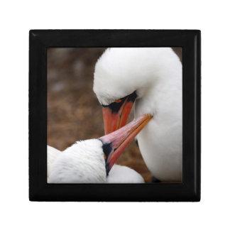 South America, Ecuador, Galapagos Islands. Nazca Small Square Gift Box
