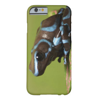 South America, Panama. Close-up of blue and Barely There iPhone 6 Case