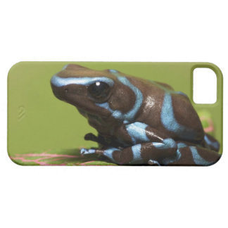 South America, Panama. Close-up of blue and iPhone 5 Case
