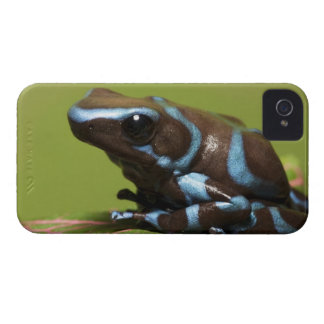 South America, Panama. Close-up of blue and Case-Mate iPhone 4 Cases