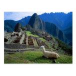 South America, Peru. A llama rests on a hill