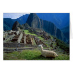 South America, Peru. A llama rests on a hill Greeting Cards