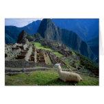 South America, Peru. A llama rests on a hill Greeting Cards