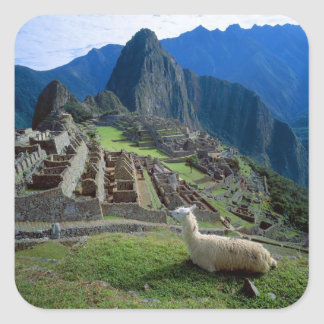 South America, Peru. A llama rests on a hill Square Sticker