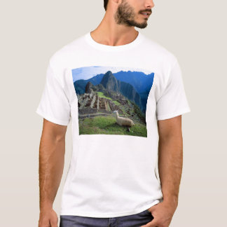 South America, Peru. A llama rests on a hill T-Shirt