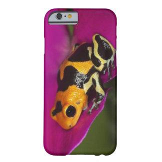 South America, Peru. Close-up of Intermedius Barely There iPhone 6 Case