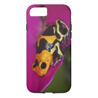 South America, Peru. Close-up of Intermedius iPhone 7 Case