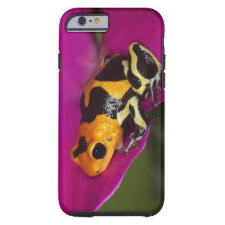 South America, Peru. Close-up of Intermedius Tough iPhone 6 Case