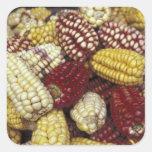 South America, Peru Corn, Maize