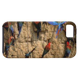 South America, Peru, Manu National Park, iPhone 5 Cases