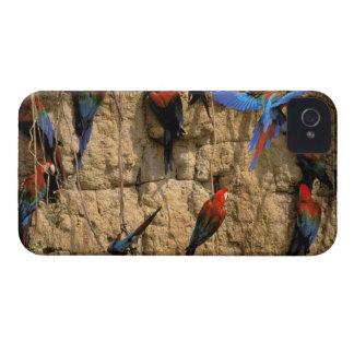 South America, Peru, Manu National Park, iPhone 4 Case