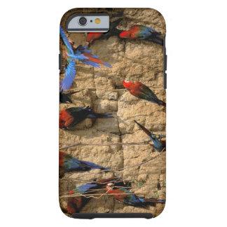 South America, Peru, Manu National Park, Tough iPhone 6 Case
