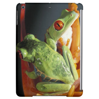 South America. Red-eyed tree frog Agalycmis