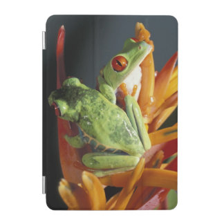 South America. Red-eyed tree frog Agalycmis iPad Mini Cover