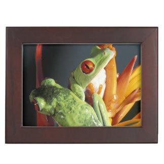 South America. Red-eyed tree frog Agalycmis Keepsake Box