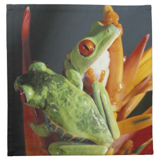 South America. Red-eyed tree frog Agalycmis Napkin