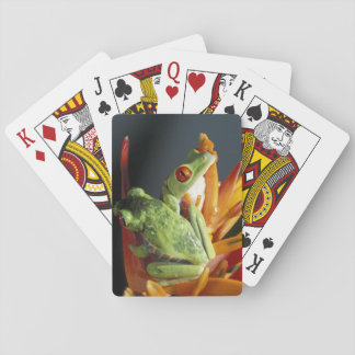 South America. Red-eyed tree frog Agalycmis Playing Cards