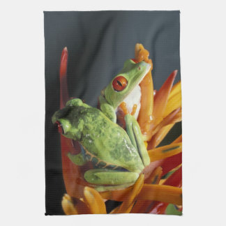South America. Red-eyed tree frog Agalycmis Tea Towel