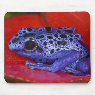 South America, Republic of Surinam. Close-up 2 Mouse Mat