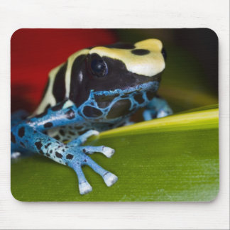 South America, Republic of Surinam. Close-up Mouse Pad